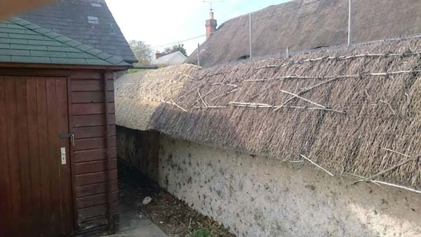 006 Repair to Cob wall - Over Wallop - In progress (5)